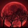 bloodmoon1240