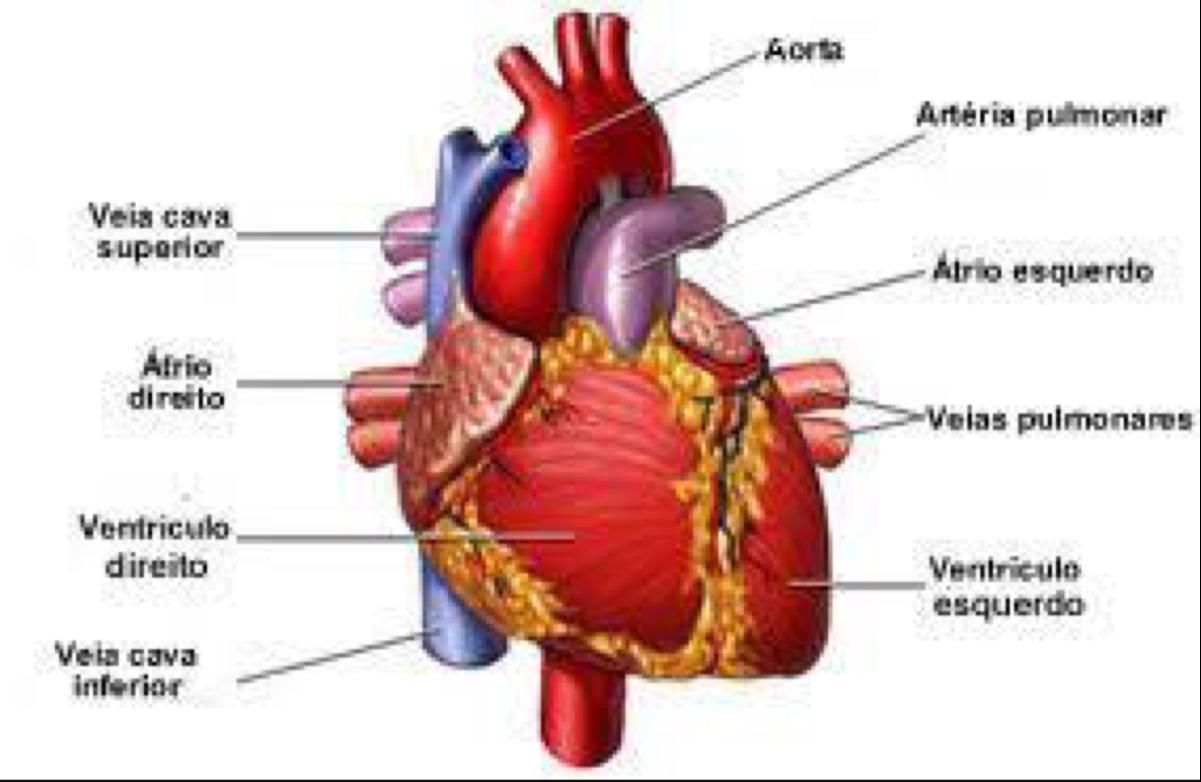 Magnífico Anatomía De Una Vela Viñeta - Imágenes de Anatomía Humana ...