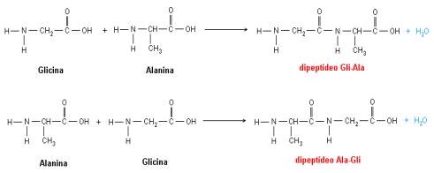 Qual O Nome Da Ligação Que Acontece Entre A Glicina E A