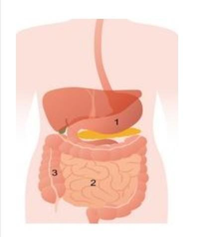 O Sistema Digestório é Composto Por Diferentes Estruturas
